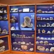 Fossilienausstellung